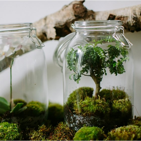 jardin miniature sous verre perfect un minijardin vgtal with jardin miniature sous verre. Black Bedroom Furniture Sets. Home Design Ideas