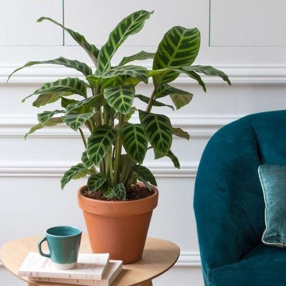 Une plante chaque mois
