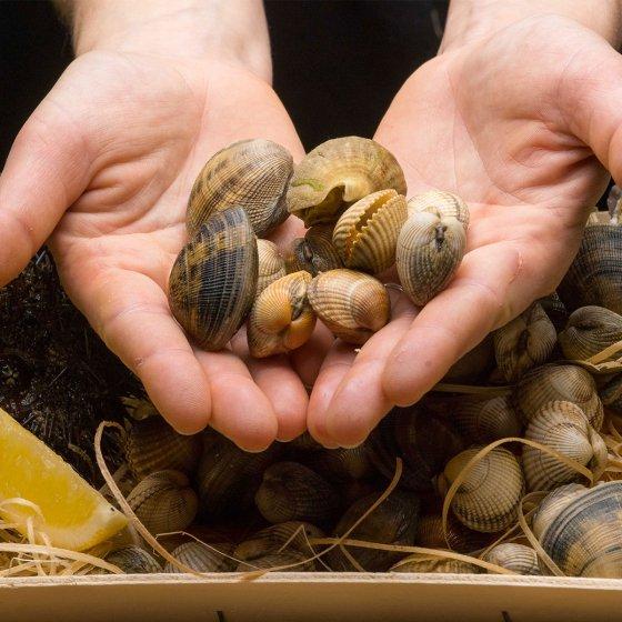 Atelier de dégustation d'huitres et coquillages
