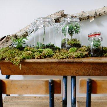 Réalisez votre propre Terrarium