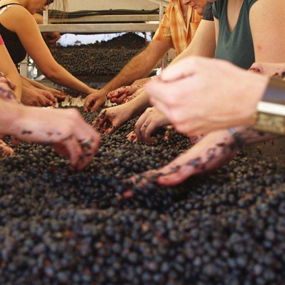 Adoptez vos pieds de vigne