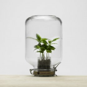 Pikaplant - un écosystème miniature
