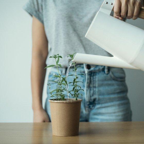 Tisanes Bio, à replanter